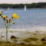 2012 - 9 Herbs for Endurance